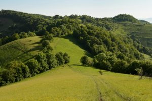 Zarand Romania
